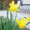 inline_130406011853.jpeg