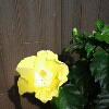 inline_130716013112.jpeg